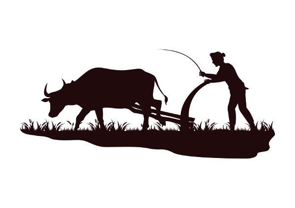 A melhoria na preparação do solo garantiu o aumento da produtividade agrícola.