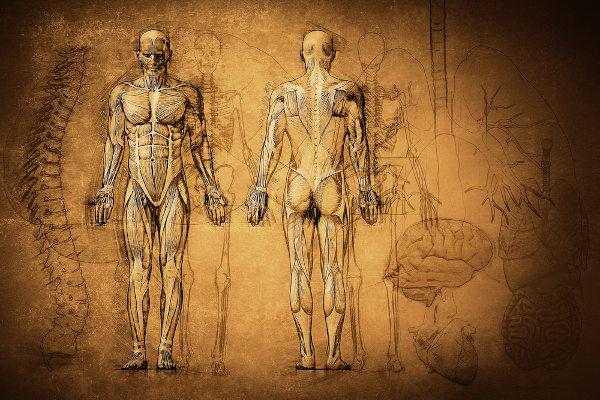 O estudo da anatomia humana é bastante antigo, mas estagnou-se por muito tempo devido a fatores religiosos.