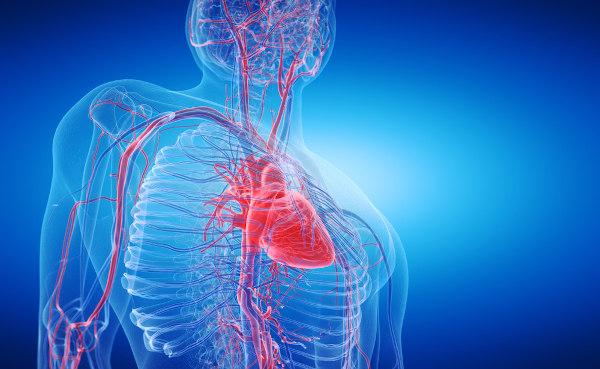A vitamina C ajuda a manter a integridade dos vasos sanguíneos.