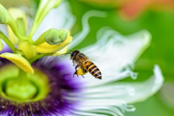 As flores exercem um papel importante na atração de polinizadores.