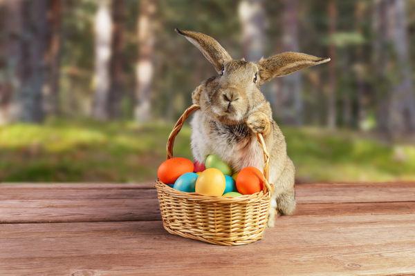O coelho enquanto símbolo pascal se consolidou somente no século XIX, e acredita-se que foi herdado da cultura germânica.