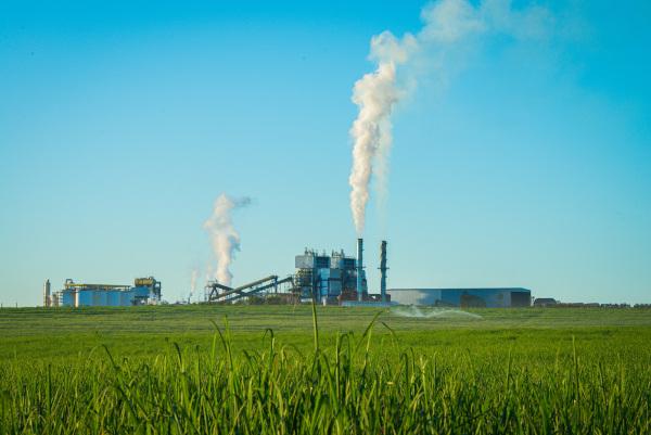 A cana-de-açúcar é o principal cultivo na Paraíba e serve de matéria-prima para a indústria sucroalcooleira do estado.