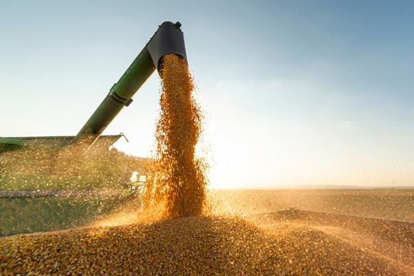 O Mato Grosso é hoje o maior produtor de soja do país.
