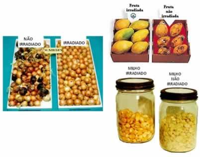 Cebola, mamões e grãos de milho irradiados e não irradiados
