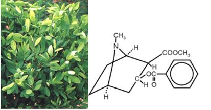 Folhas de coca e fórmula da cocaína