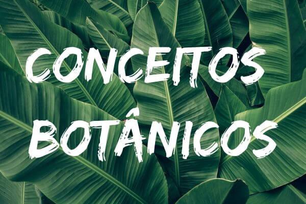Quando conhecemos bem os diferentes termos da Botânica, fica mais fácil compreender essa área da Biologia.