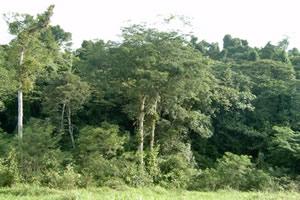 Mata Atlântica - Cobertura vegetal tropical