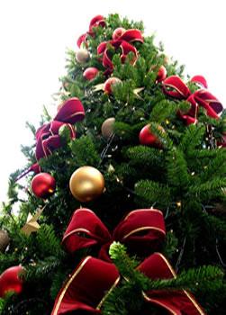 Árvore - símbolo do Natal