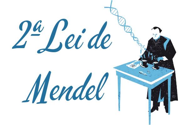 Mendel realizou experimentos que foram a base o que conhecemos hoje como segunda lei de Mendel.