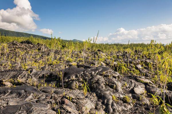 A sucessão ecológica pode ocorrer em ambientes nunca ocupados por outros organismos, como em lava vulcânica recém solidificada.