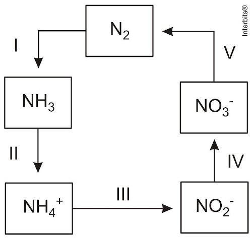 Representação do ciclo do nitrogênio — questão Enem 2014