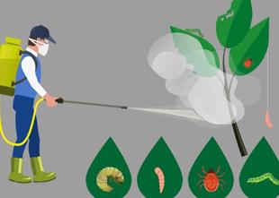 homem batendo agrotóxico em plantas