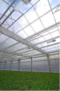 Estufa usada para cultivar plantas
