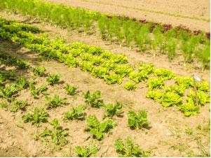 Campo de produtos orgânicos