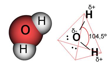 Molécula de água polar