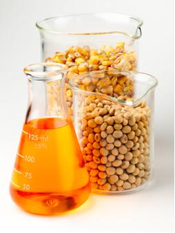 O biodiesel é obtido pela transesterificação de óleos vegetais como o do milho e da soja