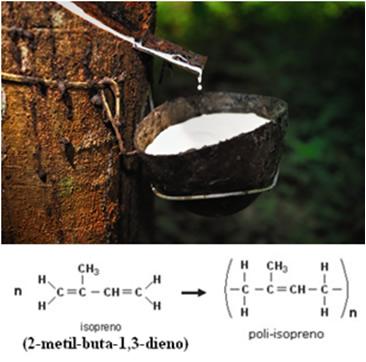 Extração de látex de seringueira para obtenção da borracha natural, formada por isopreno