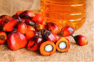 Óleo de frutos da palma (dendê)