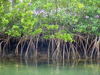 Imagem ilustrativa de um mangue