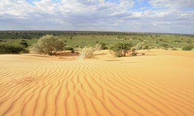 Paisagem do Deserto do Kalahari