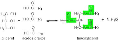 A formação de um glicerídeo ocorre pela reação entre um glicerol e ácidos graxos