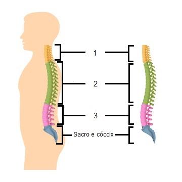 Esquema da coluna vertebral