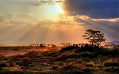 Essa poderá ser a paisagem da Amazônia caso a savanização ocorra