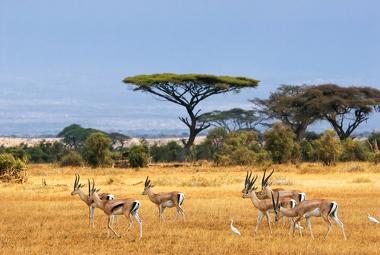 Paisagem das savanas africanas
