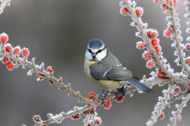 Pássaro sobre vegetação recoberta pela geada