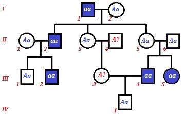 Ao final da análise, dois genótipos não podem ser determinados