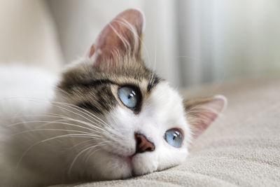 Cat: Common noun / Jack: Proper noun