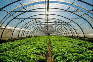 As estufas permitem a retenção do calor para o cultivo de vegetais