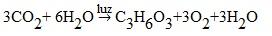 Observe a equação balanceada da fotossíntese