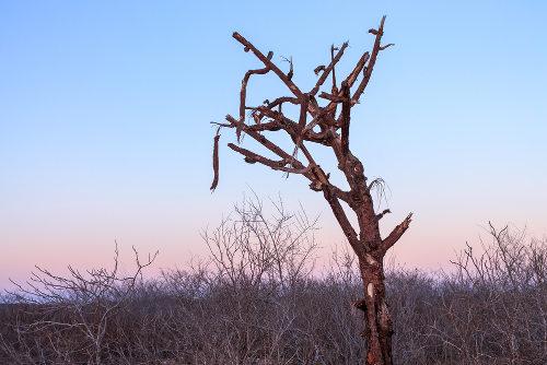 A caatinga apresenta vegetação adaptada ao clima seco