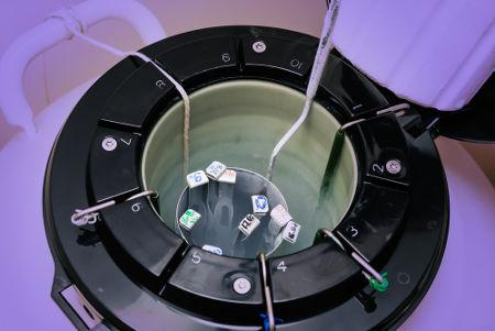 Células armazenadas em um reservatório de nitrogênio líquido