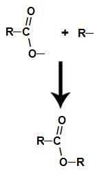 Formação da molécula de éster