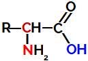 Fórmula estrutural geral de um aminoácido