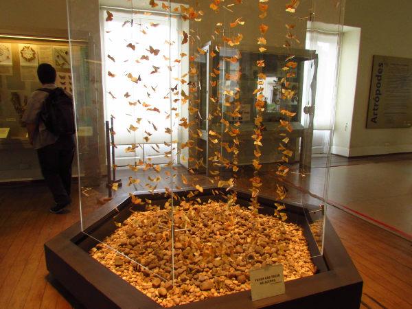 Sala da exposição Conchas, Corais e Borboletas. (Foto: Acervo pessoal da Dra. Elysiane de Barros Marinho)