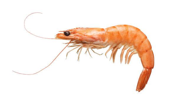 O camarão é um animal bastante utilizado na nossa alimentação.