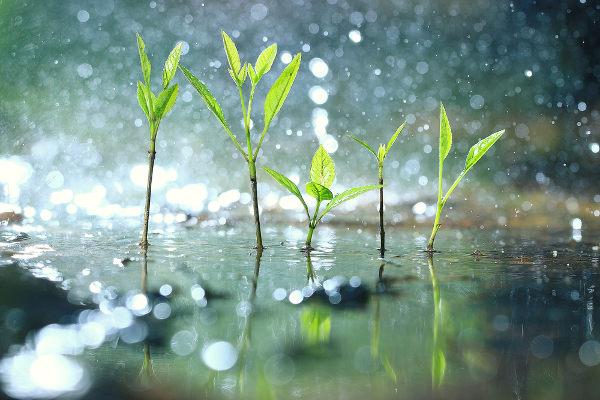 A chuva garante que a água retorne para a superfície terrestre.