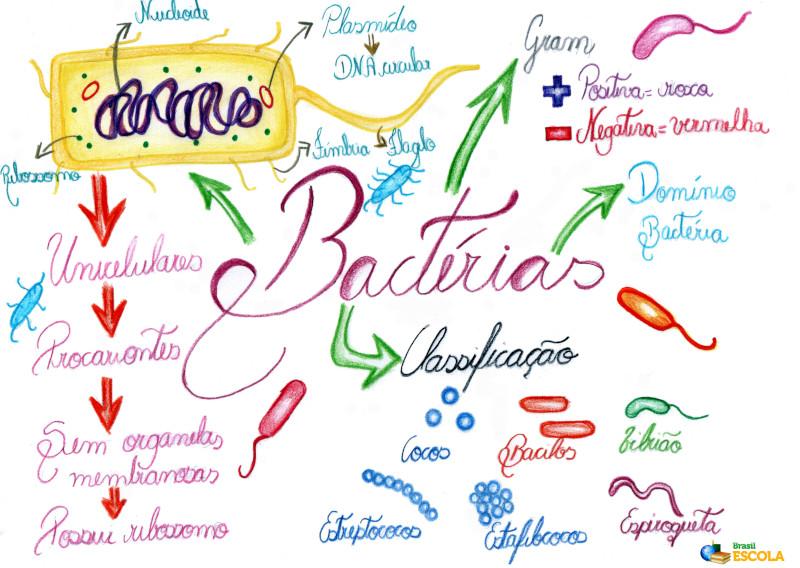 Bactérias Brasil Escola