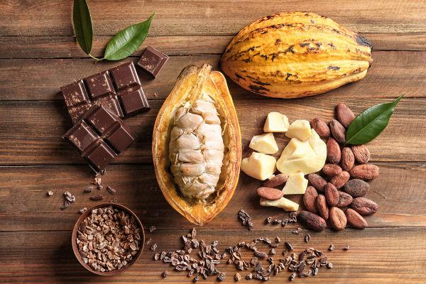 A semente do cacau é usada na produção de chocolate.