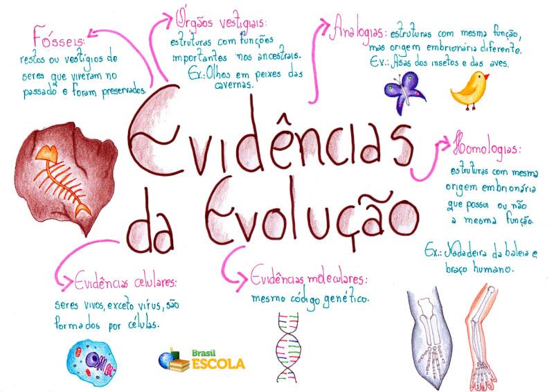 Evidências Da Evolução Biológica Brasil Escola
