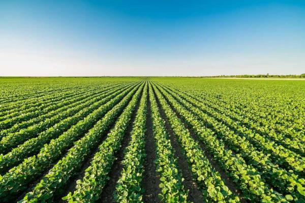 A monocultura favorece a exaustão do solo e é uma prática mais suscetível à ocorrência de pragas e de doenças.