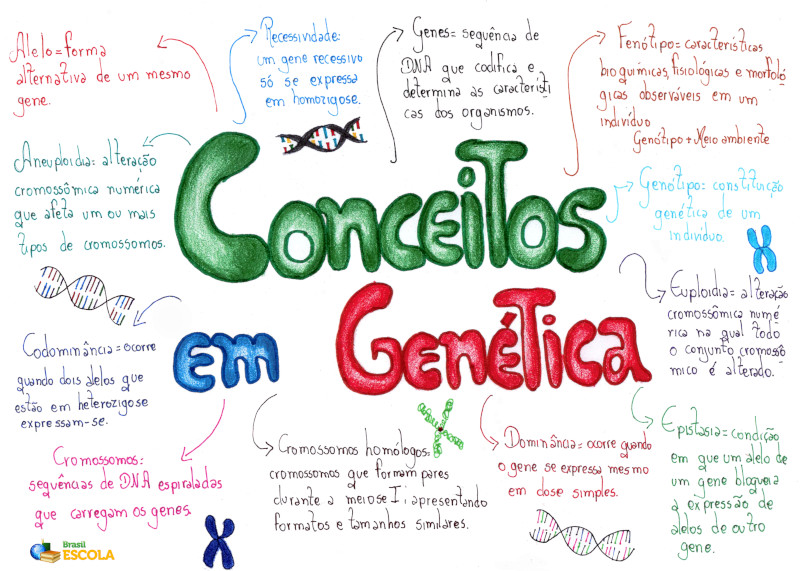 Analises cromossomas geneticos