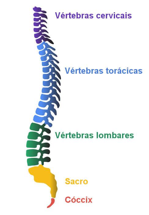 Observe os ossos que formam a nossa coluna vertebral.