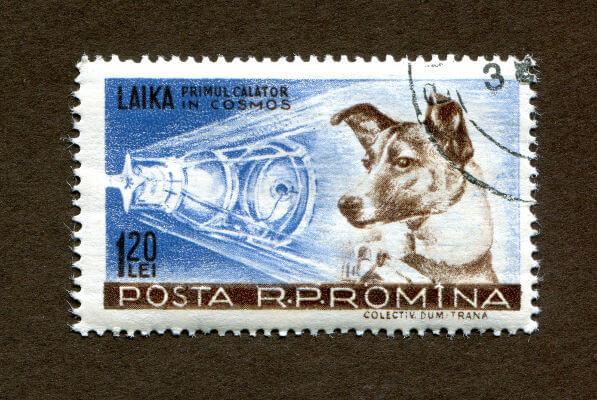 A cadela Laika foi o primeiro ser vivo a ser enviado para o espaço e estava a bordo do Sputnik 2, em 1957.**