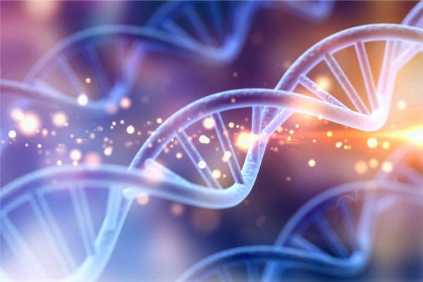 O gene é uma porção de DNA responsável pelas características hereditárias. As formas alternativas dos genes são os alelos, que podem ser dominantes ou recessivos.