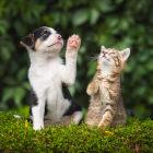 Filhotes de cachorro e gato